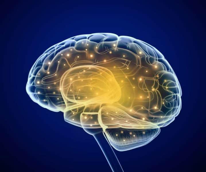 amygdala-insula-hypothesis-
