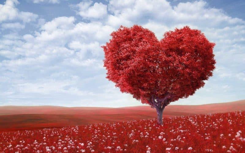 heart-shaped-tree