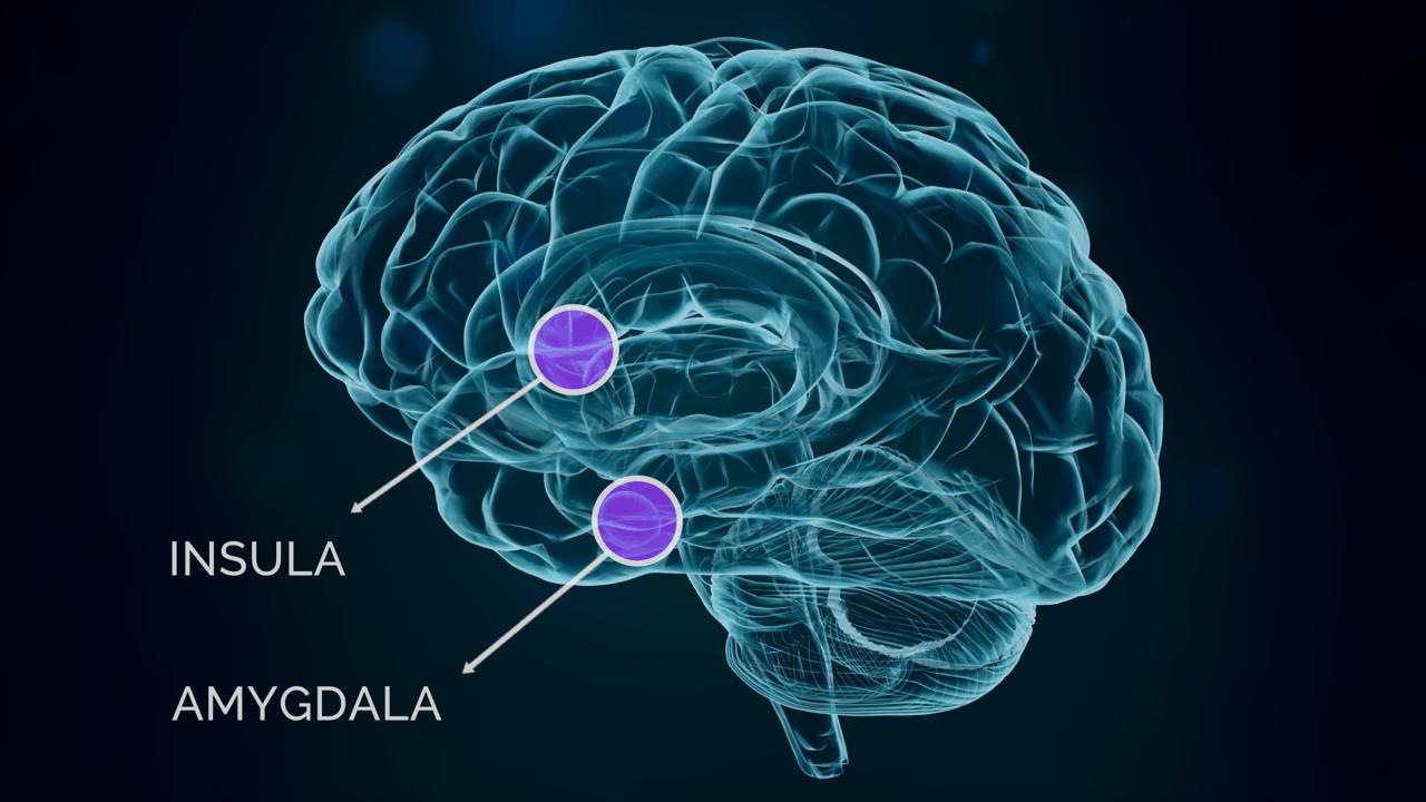 insula amygdala