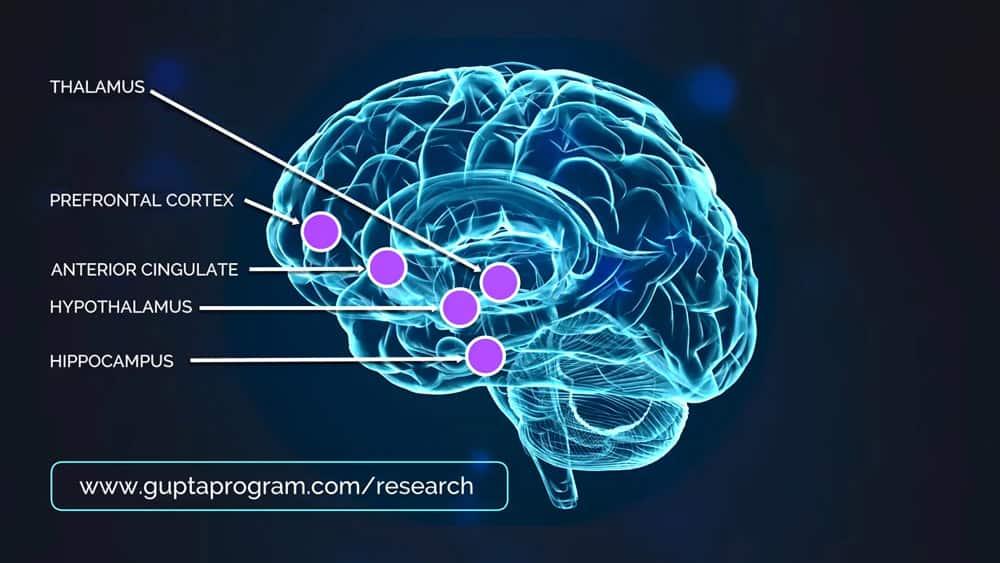 insula-and-the-amygdala