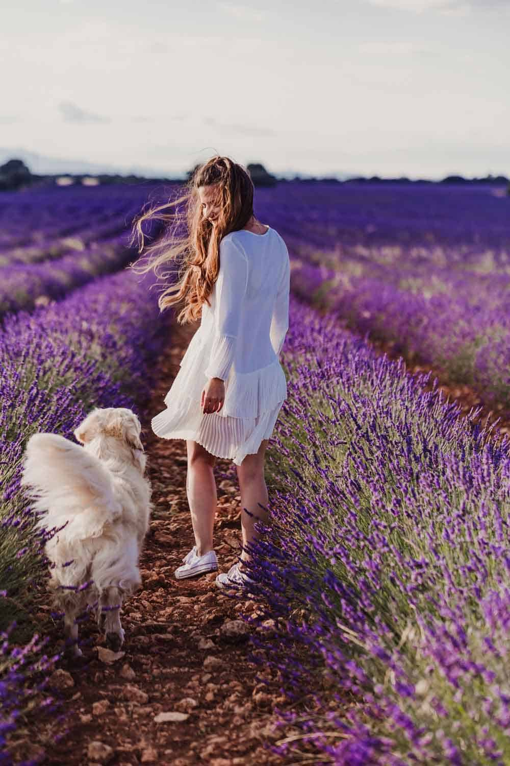woman with dog in lavender field