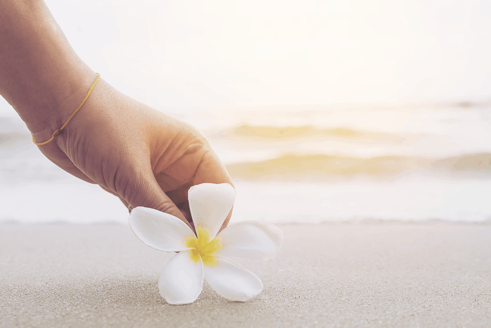 woman's hand holding white flower on beach