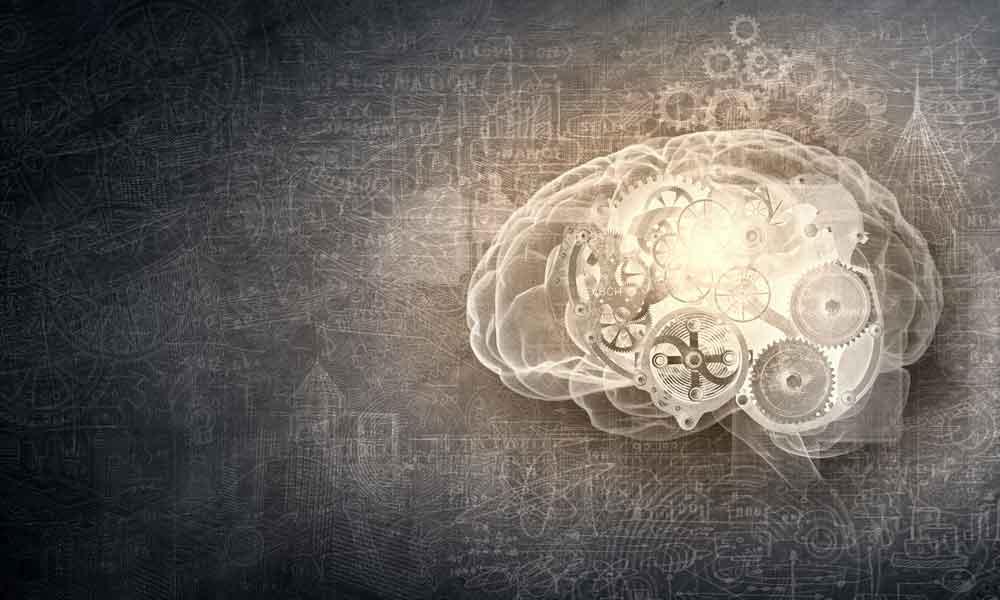 human brain image