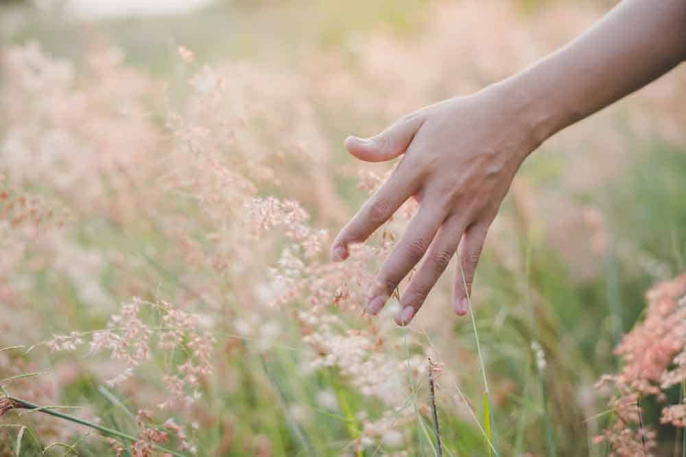 woman hand touching flower