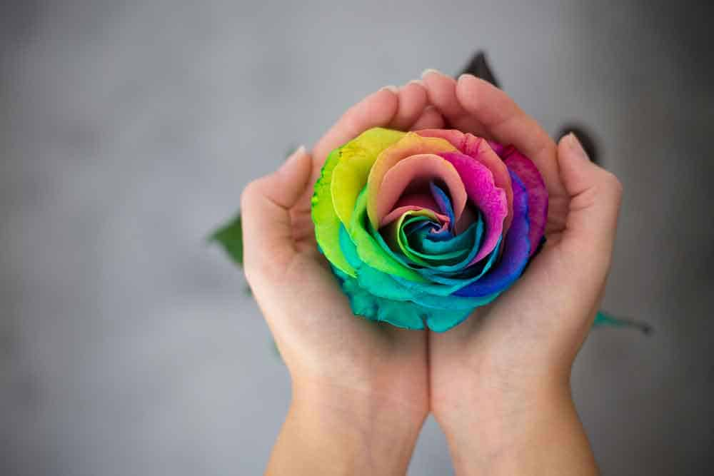 hand holding rainbow rose