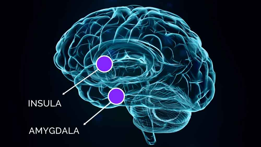 insula-and-amygdala