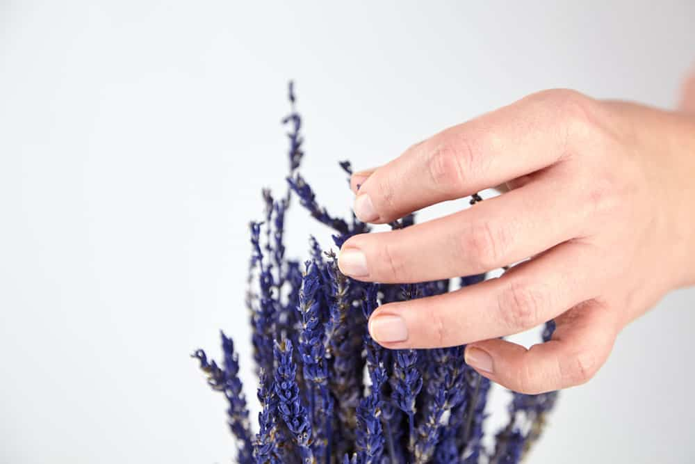 person-touching-lavender-bouquet