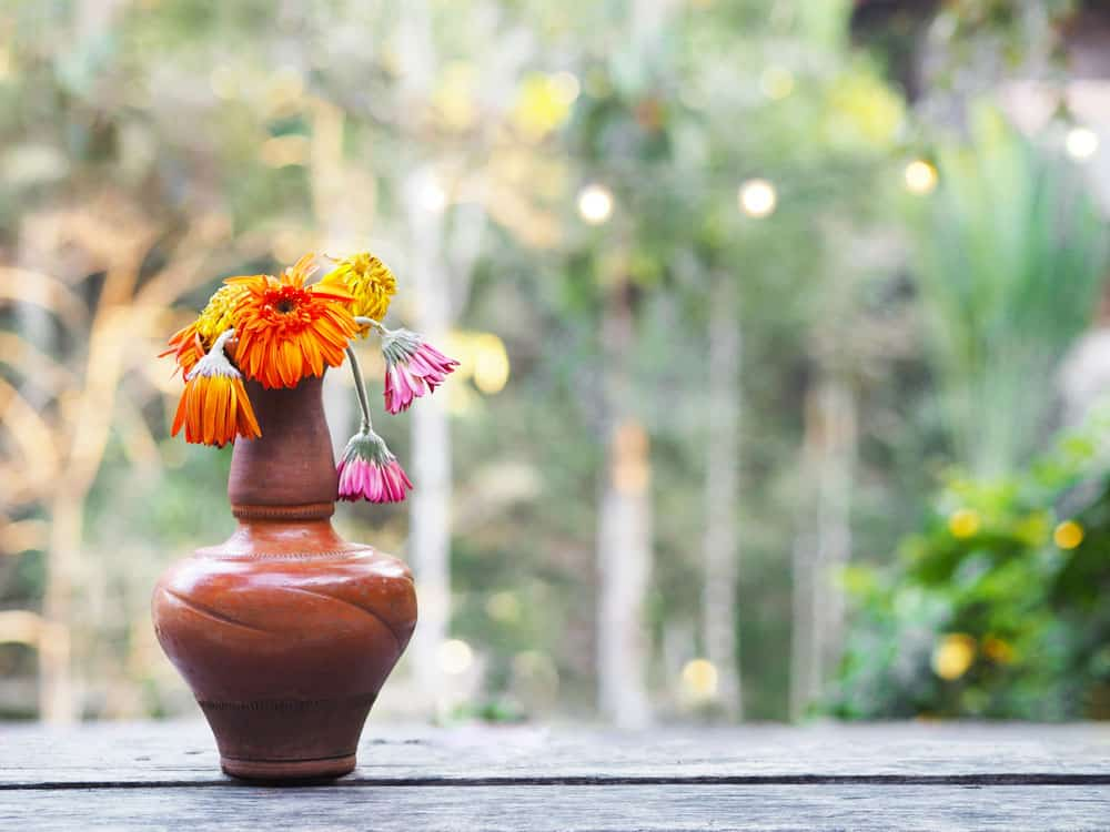 wilted-gerbera-flower-brown-vase-wooden-table