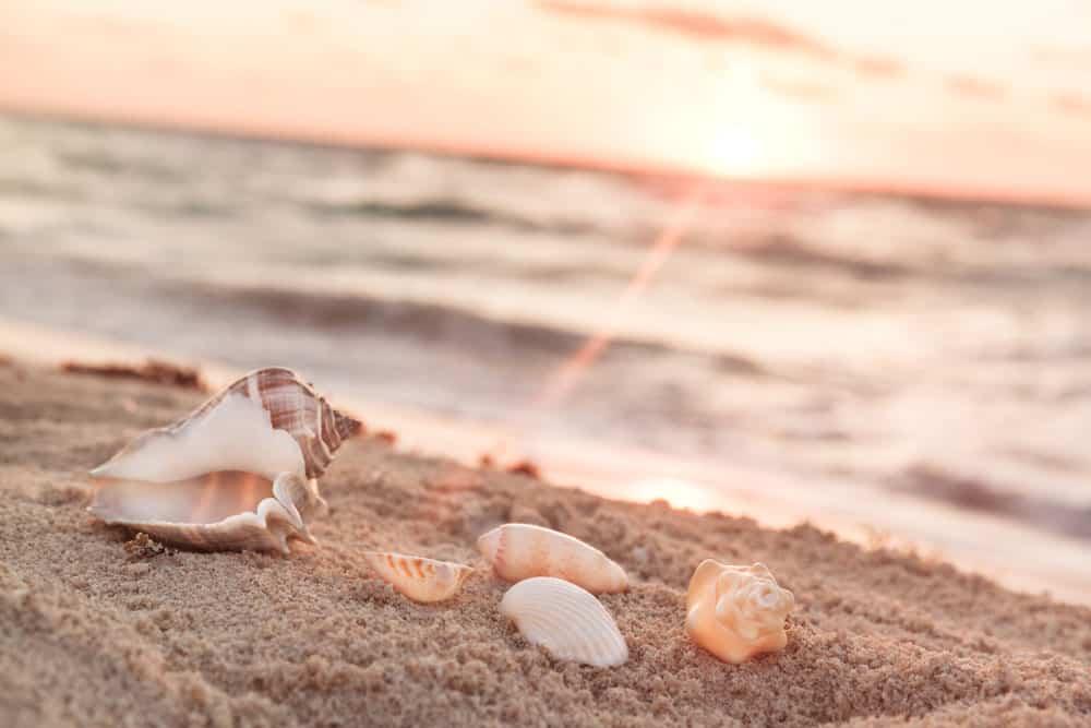 landscape-with-shells-tropical-beach-sunrise