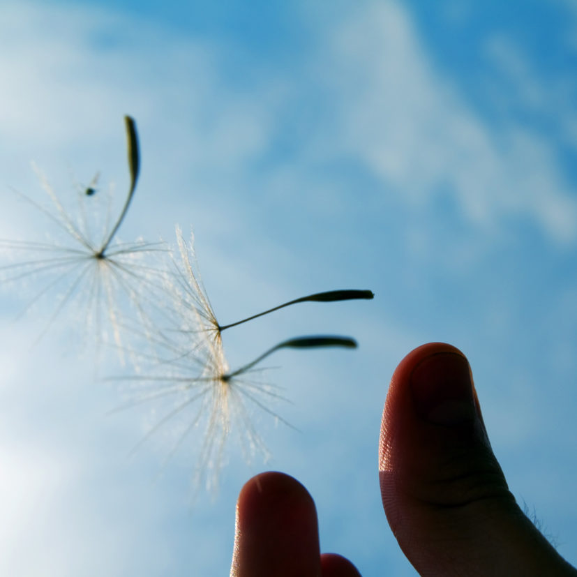 hand-holding-dandelion