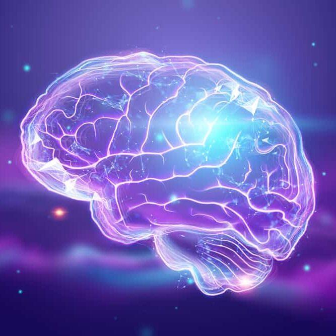 image-human-brain